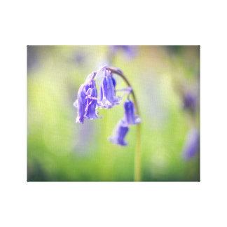 Lona del Bluebell Impresión En Lienzo