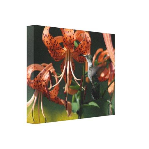 Lona del colibrí lona estirada galerias