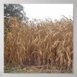 Lona del maíz de la caída poster