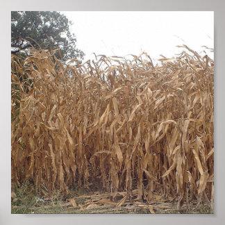 Lona del maíz de la caída póster