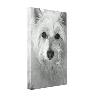 Lona del perro de Westie (montaña Terrier blanco d Impresiones En Lienzo Estiradas