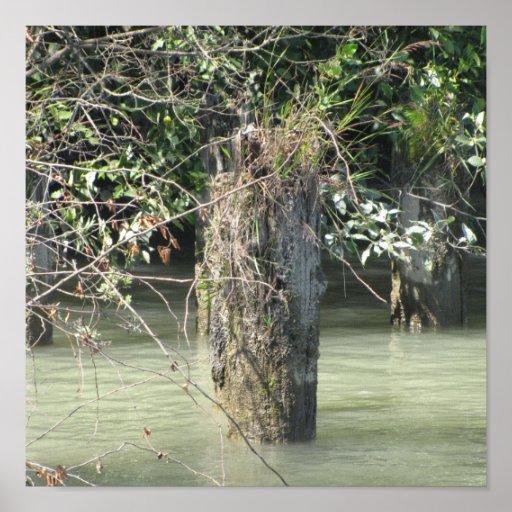 Lona del río Fraser Impresiones