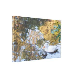Lona: El pequeño pato blanco Lona Envuelta Para Galerias