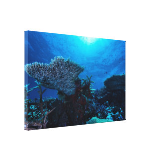 Lona envuelta arrecife de coral lona envuelta para galerias