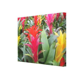 Lona - envuelta - bosque de Bromeliad Impresión En Lona Estirada