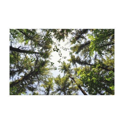 Lona envuelta bosque impresiones en lona