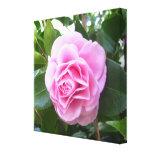 Lona - envuelta - camelia del rosa color de rosa impresion de lienzo