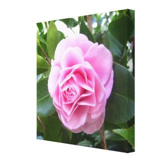 Lona - envuelta - camelia del rosa color de rosa lienzo envuelto para galerías