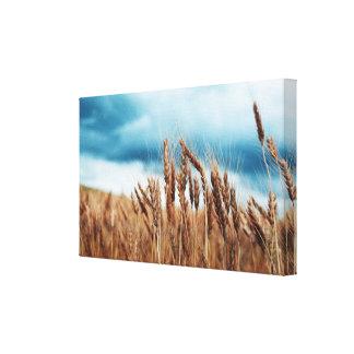 Lona envuelta cosecha del trigo impresión en lona estirada