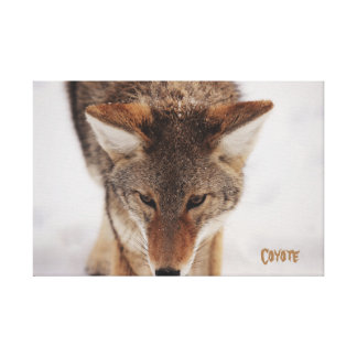 Lona envuelta coyote impresion de lienzo
