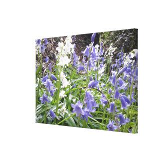 Lona envuelta de la foto 1 de los Bluebells de la Impresión En Lienzo