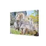 Lona envuelta de las ovejas de montaña impresión en lona