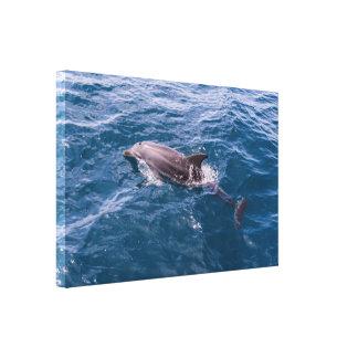Lona envuelta del delfín de Bottlenose Impresión En Lona
