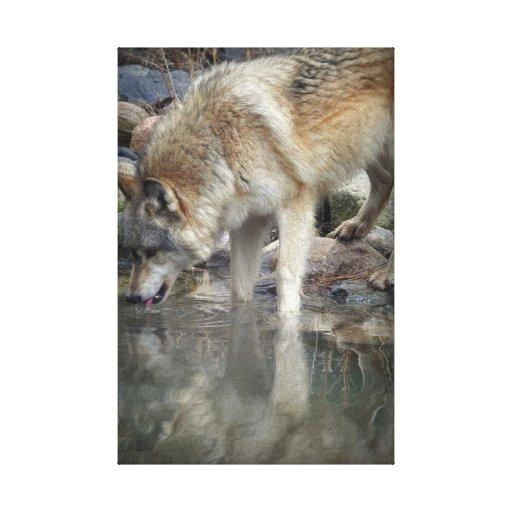 Lona envuelta del lobo gris lienzo envuelto para galerías