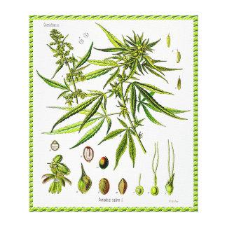 Lona envuelta dibujo de la botánica del vintage de impresiones en lona estiradas