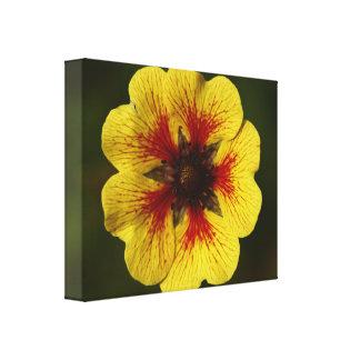 Lona envuelta flor amarilla impresiones de lienzo