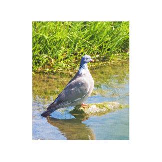 Lona envuelta foto hermosa del pájaro de la paloma impresión en lienzo