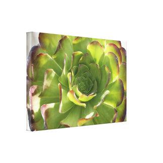 Lona envuelta foto suculenta del jardín impresión en lona