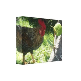 Lona envuelta gallo impresiones en lienzo estiradas