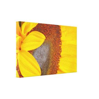 Lona envuelta girasol impresión en lienzo estirada