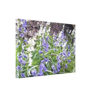 Lona envuelta gruesa de la foto 2 de los Bluebells Impresión En Lienzo