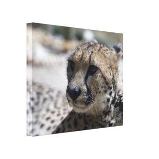 Lona envuelta guepardo impresión en lona estirada
