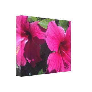 Lona envuelta hermosa rosada del hibisco b impresiones en lona