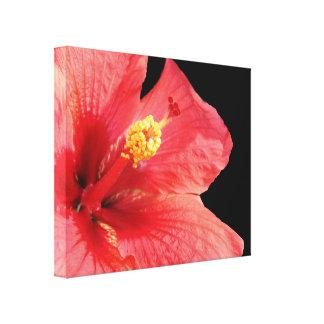 Lona envuelta hibisco impresiones en lona