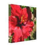 Lona envuelta hibisco rojo impresiones de lienzo