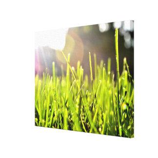 Lona envuelta hierba lona estirada galerías