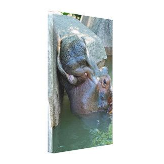 Lona envuelta hipopótamo lona estirada galerias