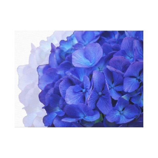 Lona envuelta Hydrangea azul Lona Estirada Galerias