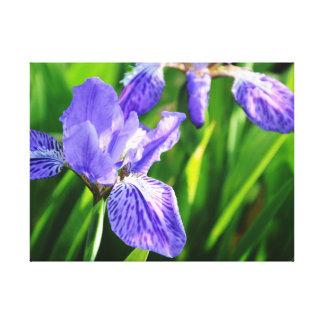 Lona envuelta iris japonés del tejado impresión en lienzo