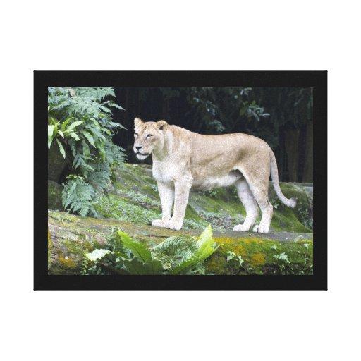 Lona envuelta león impresión en lona