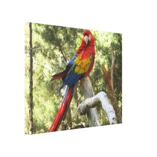 Lona envuelta loro rojo del Macaw Lienzo Envuelto Para Galerias