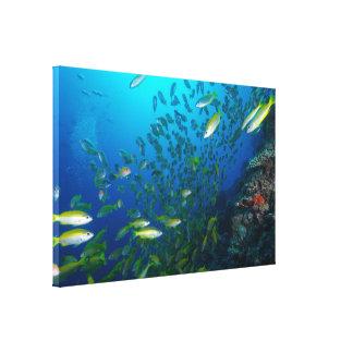 Lona envuelta mar de coral impresiones en lienzo estiradas