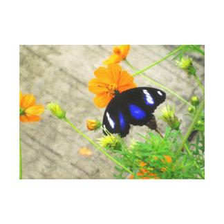 Lona envuelta mariposa azul y negra clásica impresiones en lona estiradas