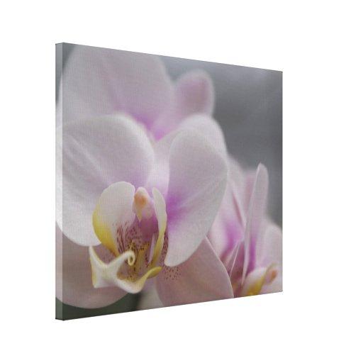 Lona envuelta orquídea blanca (lustre) impresiones en lona