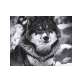 Lona envuelta premio del lobo lustre lona envuelta para galerías