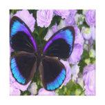 Lona envuelta premio púrpura de la mariposa impresión en lona estirada