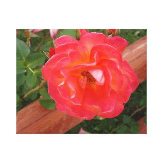 Lona envuelta rosa fucsia impresiones en lona
