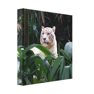 Lona envuelta tigre blanco lienzo envuelto para galerias