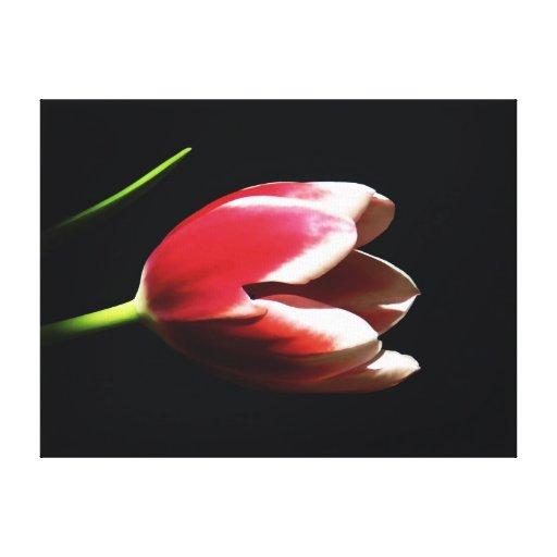 Lona estirada tulipán de la hierbabuena impresiones en lona estiradas