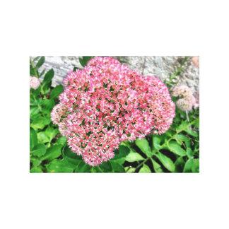 Lona floral de Sedum Lona Estirada Galerías