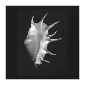 Lona gigante del truncata del Lambis del Seashell  Lona Estirada Galerias
