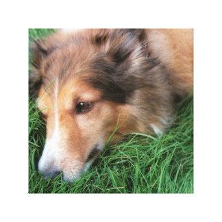 Lona leal del compinche del Lassie Impresión En Lienzo Estirada