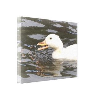 Lona: Pato de Aylesbury Lona Envuelta Para Galerias