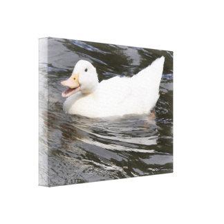 Lona: Pato de Aylesbury Impresiones En Lona