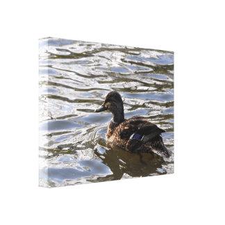 Lona: Pato femenino del pato silvestre Lienzo Envuelto Para Galerías