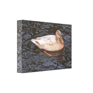 Lona; Pato femenino del pato silvestre Lienzo Envuelto Para Galerias